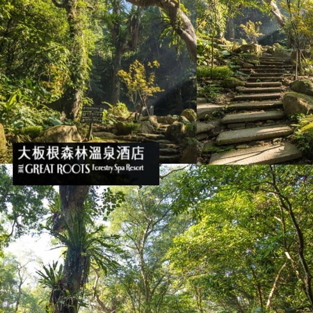 【三峽大板根】三峽大板根森林遊園門票一組4張(限量搶購)