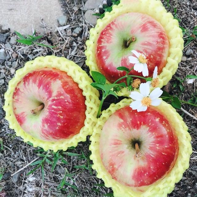 【水果達人】嚴選大顆 紐西蘭無臘蜜蘋果6顆* 1盒(蜜蘋果)