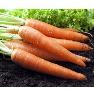 【鮮採家】鮮採紅蘿蔔10台斤1箱
