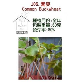 【蔬菜工坊】J06蕎麥種子(芽菜種子)