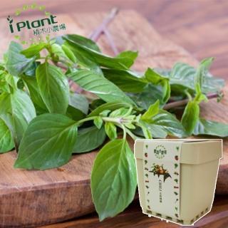 【iPlant】積木小農場-九層塔(開心農場療鬱小物)