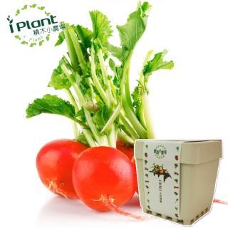 【iPlant】積木小農場-櫻桃蘿蔔(開心農場療鬱小物)