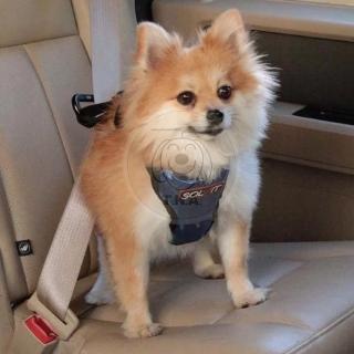 【SOLVIT】寵物車用用品 SV404升級款豪華寵物車載安全帶S號(適用3-11kg)