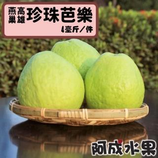 【阿成水果】高雄燕巢珍珠芭樂(5台斤/件)