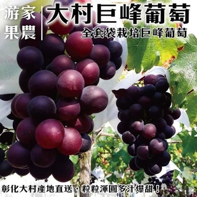 【農民直配】大村特大顆巨峰香檳葡萄X1箱(每箱4串入/約4斤±10%含箱重)