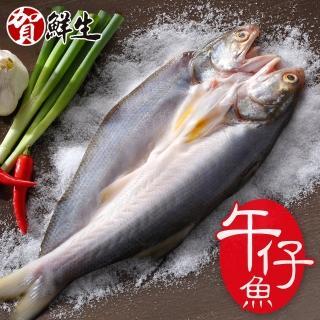 【賀鮮生】薄鹽午仔魚一夜干14尾(185g/尾)