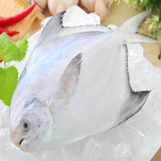 【海之醇】野生正白鯧魚-3隻組(350g/隻)